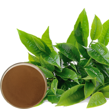 Green Tea Extract Tea Powder Polyphenol
