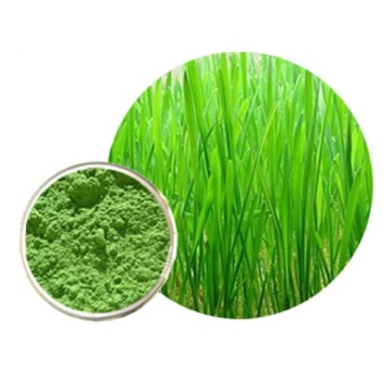 High Quality Barly Grass Powder