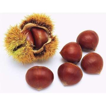 The Best Quality Selected Chestnuts