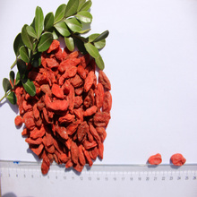 Natural Low Price Free Sample Goji Berry