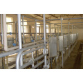 Automatic fishbone milking parlor for cows