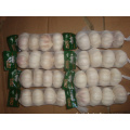 Normal White Garlic 4 pieces bag different sizes