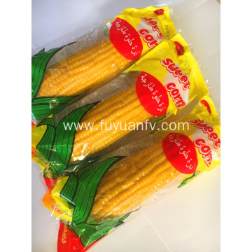 Big sweet corn with good quality