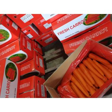 Fresh Long carrot carton packing