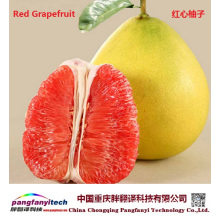 Fresh Nutritional Self-produced Tasty Aromatic Grapefruit