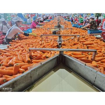 CHINESE WHOLLESALES FRESH CARROT