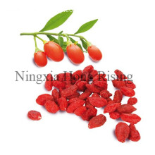 TOP quality goji berry support OEM