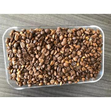Grade 2 Screen 13 Robusta Coffee Beans