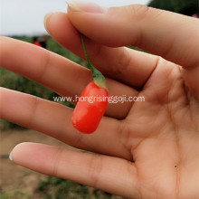 Low Pesticide Dried Ningxia Gojiberry for Japan market
