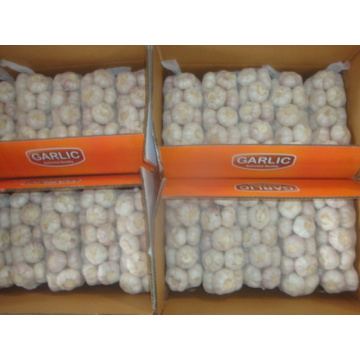 Ail blanc normal emballé 1Kg 10bags Carton