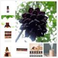 Nature winter jasmine Fragrance Aromatherapy Essential Oils Pure Handmade Cold press Camellia Aromatherapy Essential oil 10ml