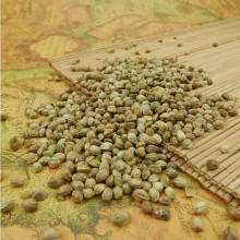 Human Hemp Seeds with competitive price