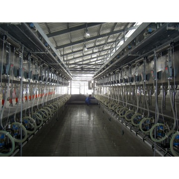 Parallel quick-release type milking hall