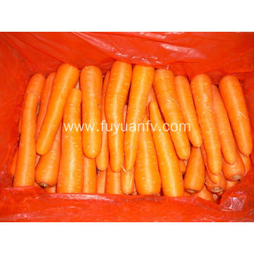 Shandong Carrot new crop