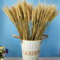 Real Wheat Ear Flower Decoration Natural Pampas Rabbit Tail Grass Dried Flowers For Wedding Party DIY Craft Scrapbook Bouquet