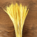 Real Grain Wheat Ears Natural Dried Flower Bedroom Living Room Kerst Decoration Bouquet Shooting Props Opening Barley Home Decor