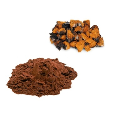 Factory direct chaga mushroom extract