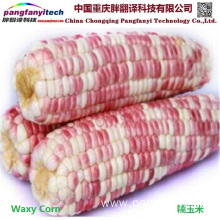 Natural Tasty Healthy Self-produced Sweet Waxy Maize