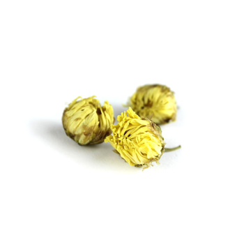 Chrysanthemum dried for tea
