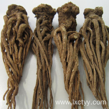 angelica acutiloba root extract