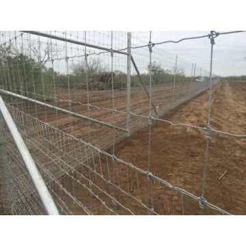 Farm And Ranch Fence