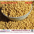 Healthy Nutritious Self-planted Dried Soybean