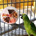 Parrot Foraging Toys Device Bird Bite Toy Wheel Shape Rotatable Birds Puzzle Feeding Food Box