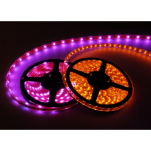 5050 RGBW/RGBWW/RGBCW LED Strip DC12V DC24V Available