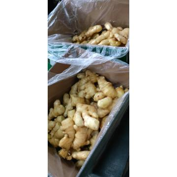 top quality 2020 new fresh ginger