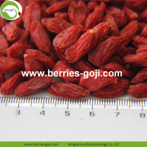 Buy Natural Nutrition Dried Fruit Lycium Chinense