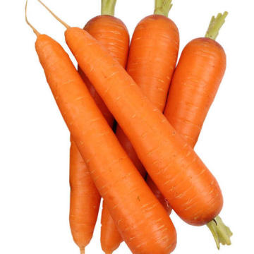 new harvested fresh carrot