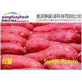 Fresh Nutritional Tasty Self-planted Sweet Potato