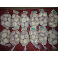 Regular White Garlic Fresh New Crop