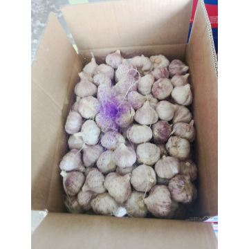 New Crop Fresh Normal Red White Garlic Alho