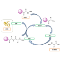 Resins for Solid Phase Synthesis SPCR140