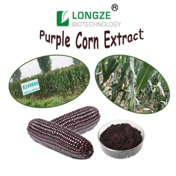Purple Corn Extract Powder