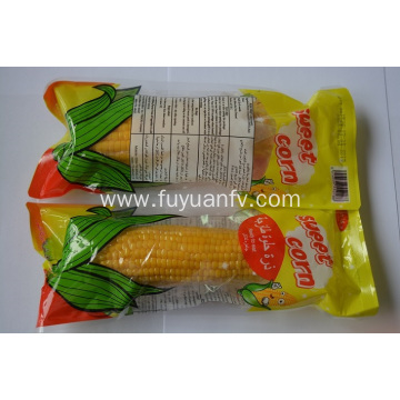 Yellow Fresh Sweet Corn