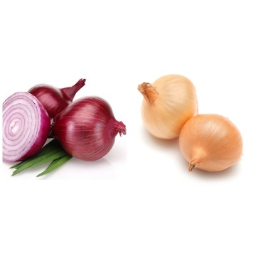 selected quality fresh red onion
