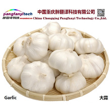 Natural Nutritional Healthy Tasty Self-planted  Garlic