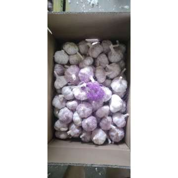 wholesale new crop white garlic fresh garlic price