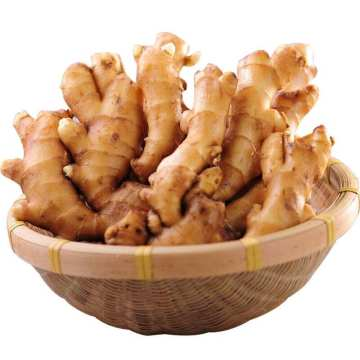 Chinese Planting Origin Direct selling Yellow Fresh Ginger