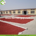 Factory Supply Nutrition Dried Lycium Berry