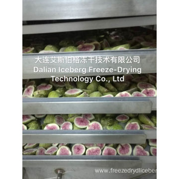 Freeze-drying Equipment In Germany