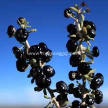 Black Goji berry in Dried Fruit