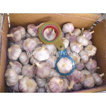 Normal white garlic 5.5 cm from jinxiang