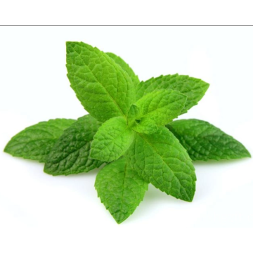 Peppermint essential oils for pregnancy
