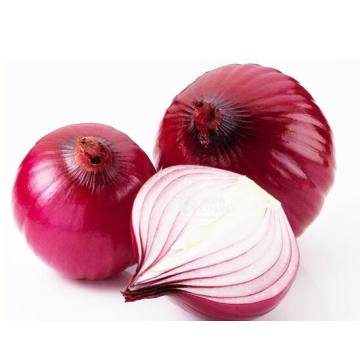 Supreme Quality New Crop Onion