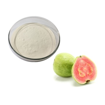 Hot Sale guava extract psidium guajava extract