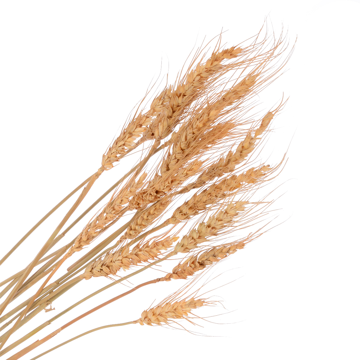 15 branches of Wheatear Natural Raw Color Dried Wheat Bouquet Photo Prop Wedding Decoration Supplies