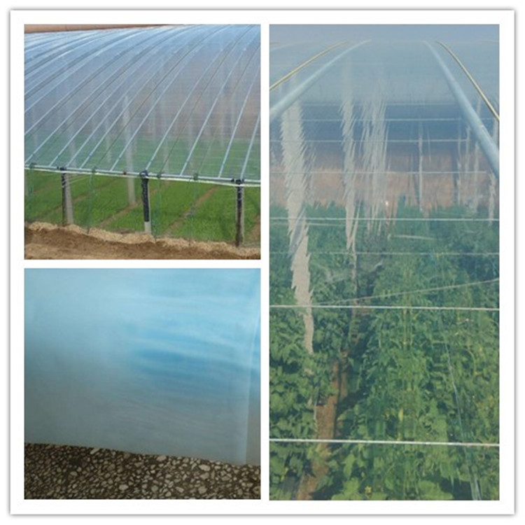 Greenhouse Film